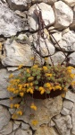 Primaveraa-eremo-web-2.jpg
