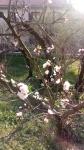 Primaveraa-eremo-web-3.jpg
