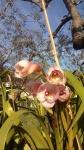 Primaveraa-eremo-web-4.jpg