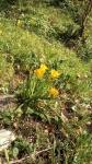 Primaveraa-eremo-web-5.jpg