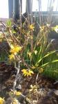 Primaveraa-eremo-web-6.jpg