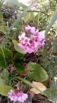 Primaveraa-eremo-web-7.jpg