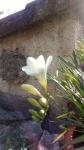 Primaveraa-eremo-web-8.jpg