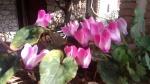 Primaveraa-eremo-web-10.jpg