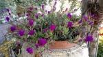 Primaveraa-eremo-web-11.jpg
