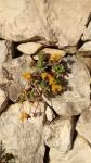 Primaveraa-eremo-web-12.jpg