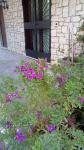 Primaveraa-eremo-web-13.jpg