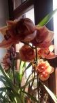 Primaveraa-eremo-web-14.jpg