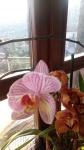 Primaveraa-eremo-web-15.jpg